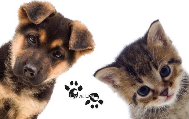 Sesion de belleza completa para perros y gatos