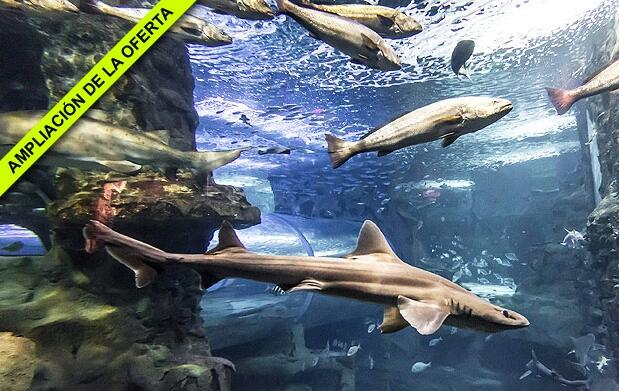 Menú + Entrada Aquarium