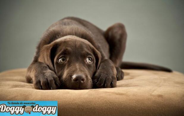 Taller canino