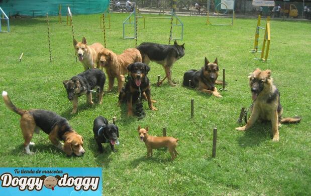Taller de iniciación de educación canina cívica