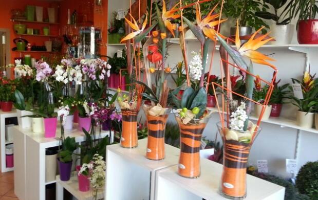 Regala una orquídea por San Valentín