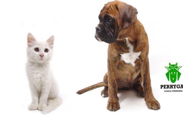 Chequeo veterinario y vacunación
