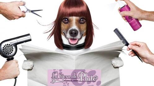 Corte de pelo y limpieza completa de tu perro en La Tijera de Pluto