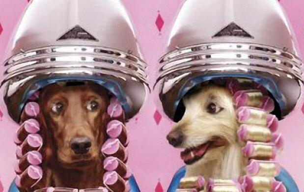 Sesión de peluquería canina