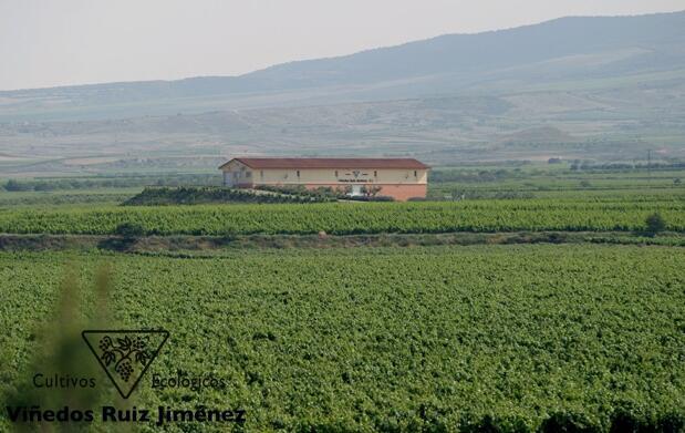 Visita los Viñedos Ecológicos Ruiz Jiménez