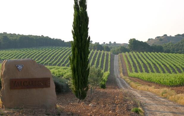 Ven a los viñedos ecológicos Ruiz Jiménez