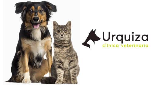 ¡Cuida la salud de tu perro! Vacunación, desparasitación interna, revisión y microchip